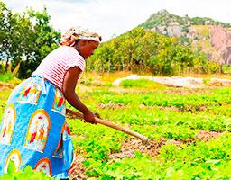 Servicios | PROMUNDO Microfinanciera